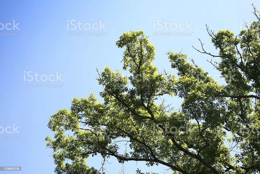 Trees in springtime royalty-free stock photo