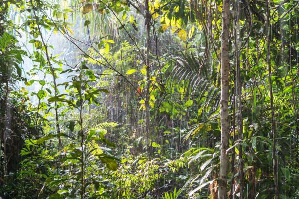 Bäume bei Sonnenlicht und Regen – Foto