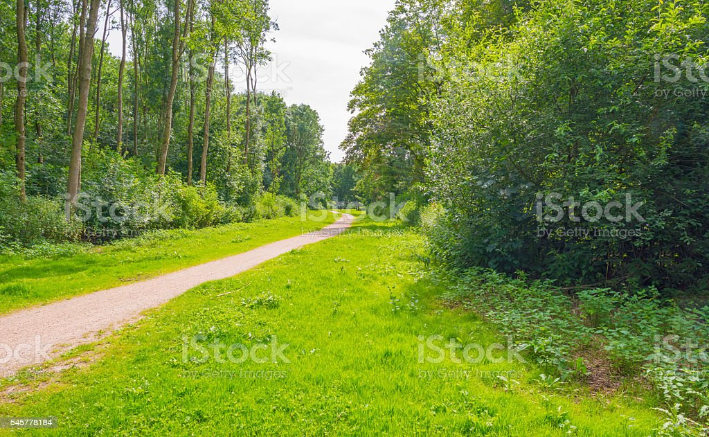 Trees in sunlight in summer stock photo
