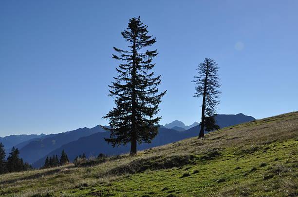 Bäume in der Schweiz – Foto