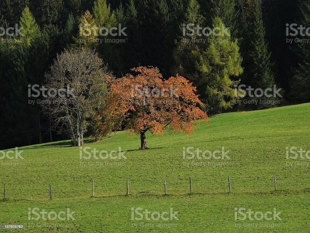 Trees In The Autumn stock photo