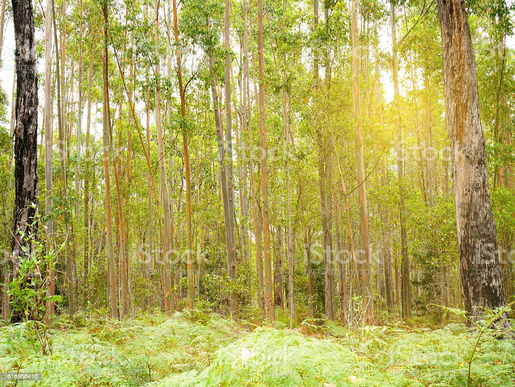 Trees in the bush stock photo
