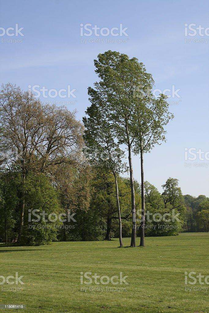 Trees in the English Garden stock photo
