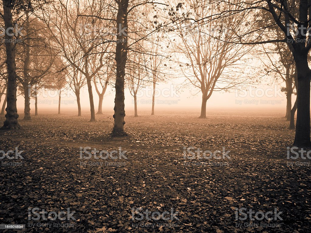 Trees In The Fog, Regent's Park, London. royalty-free stock photo