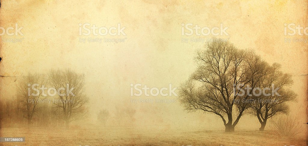 trees in the fog vintage photo royalty-free stock photo
