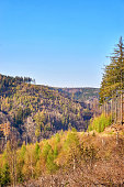 Trees in the Harz Mountains under a blue sky.