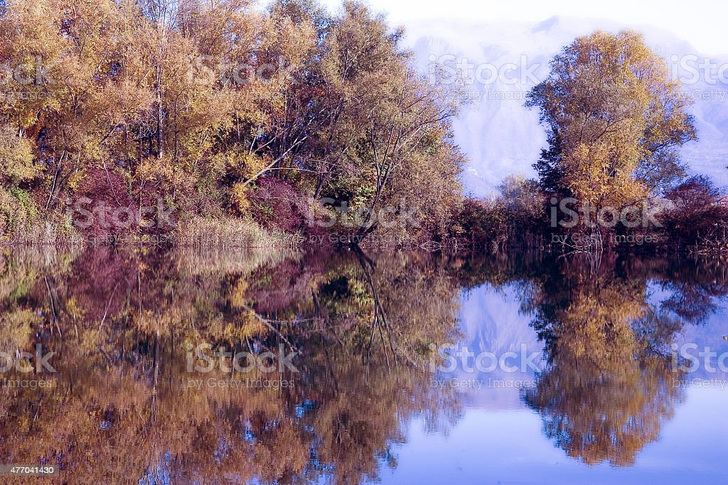 Trees in the lake stock photo
