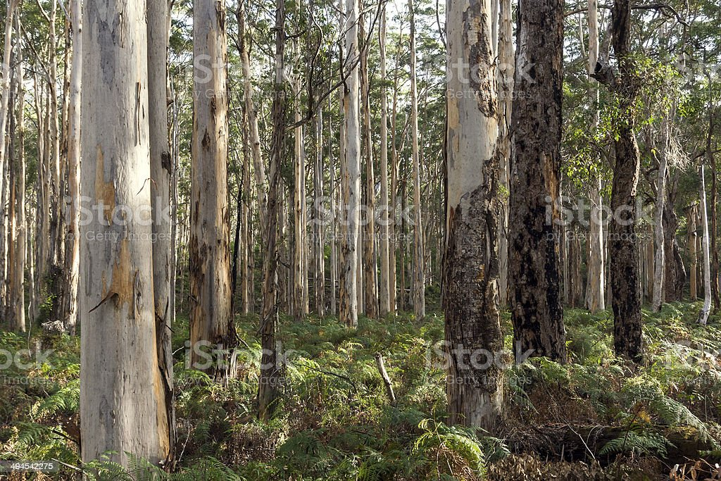 Trees in the Margaret River region of Western Australia stock photo