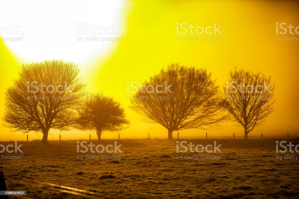 trees in the morning fog stock photo