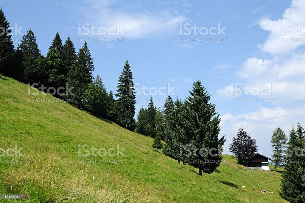 Trees in the Mountains stock photo