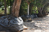 Trees in the nursery