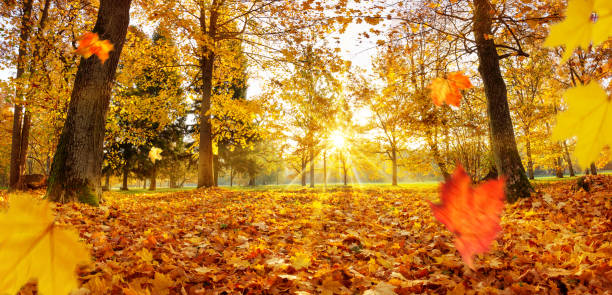 trees in the park in autumn on sunny day - autumn stock pictures, royalty-free photos & images