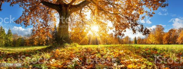 Photo of Trees in the park in autumn on sunny day
