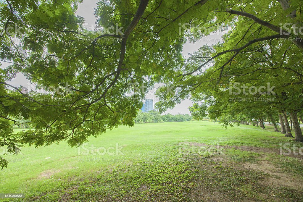 Trees in the park stock photo