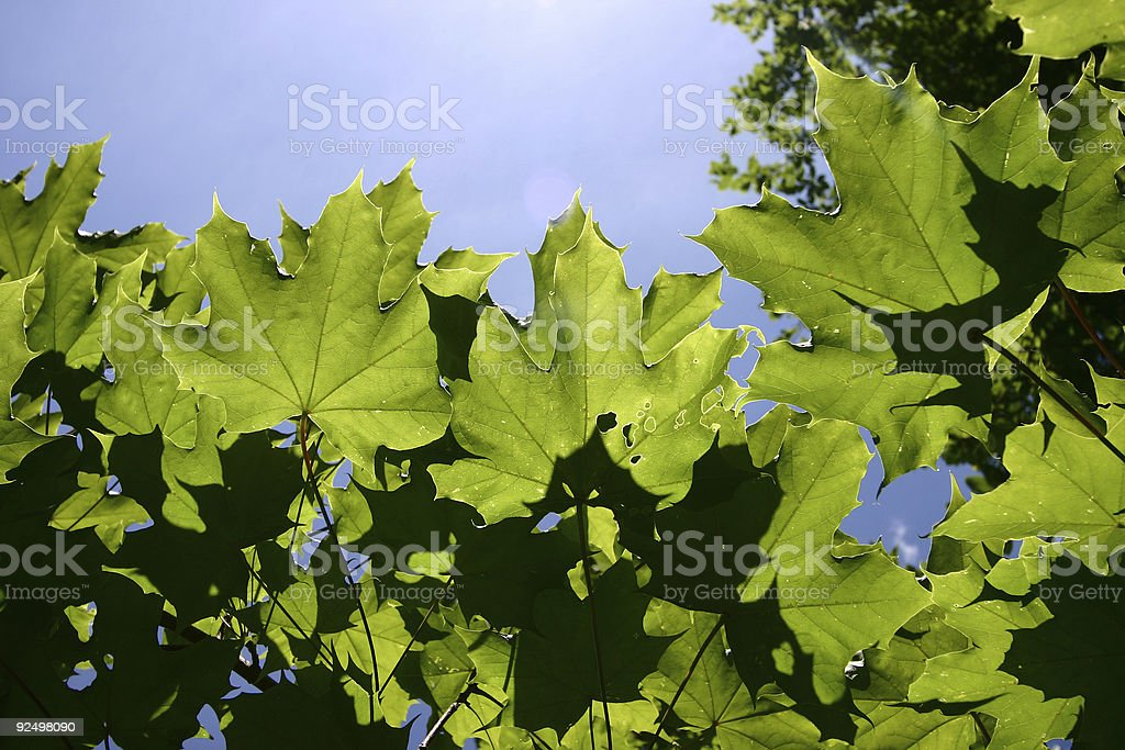 trees in the sky royalty-free stock photo