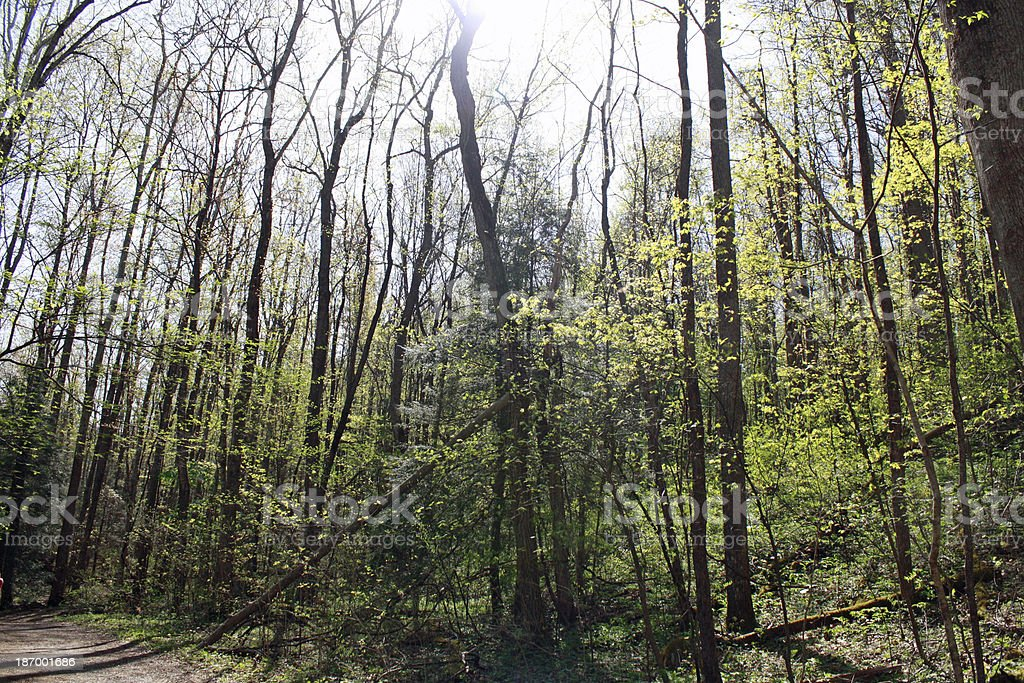 Trees in the Smoky Mountains 2 royalty-free stock photo