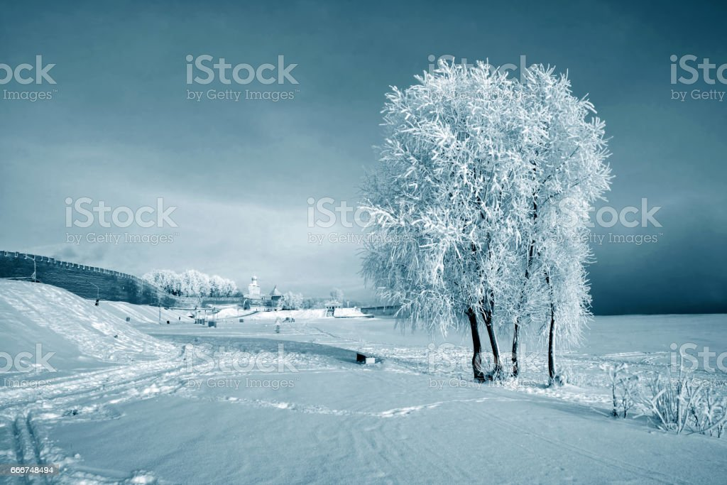 Trees in the snow in winter winter landscape foto stock royalty-free