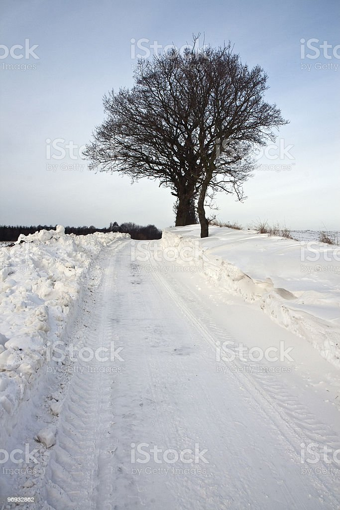 Trees in the Snow royalty-free stock photo