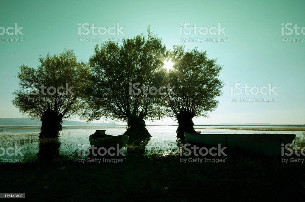 Trees in the sunset.. stock photo