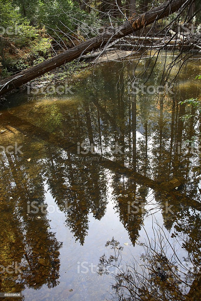 Trees In The Water royalty free stockfoto