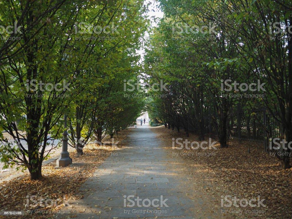 trees in Venaria stock photo