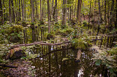 Trees in water in Briesetal - a flooded swamp forest in Brandenburg, Germany