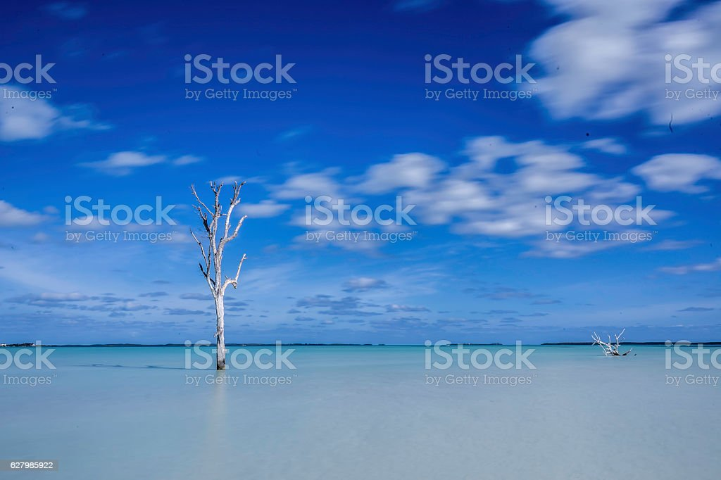 Trees in Water stock photo