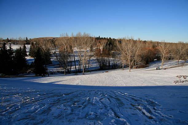 bäume im winter 4 - moo stock-fotos und bilder