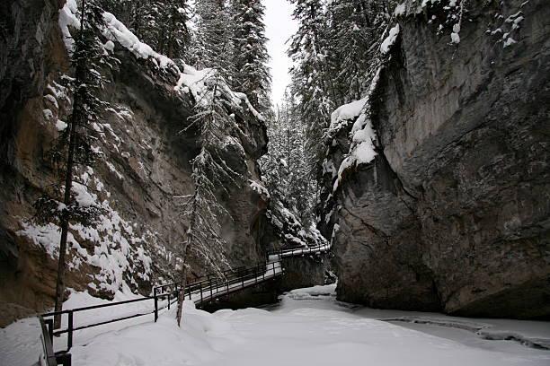 bäume im winter 9 - moo stock-fotos und bilder
