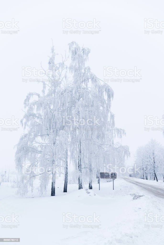 Trees in winter are covered with snow near the road stock photo