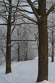Snow, Winter, Forest, Blizzard, Tree