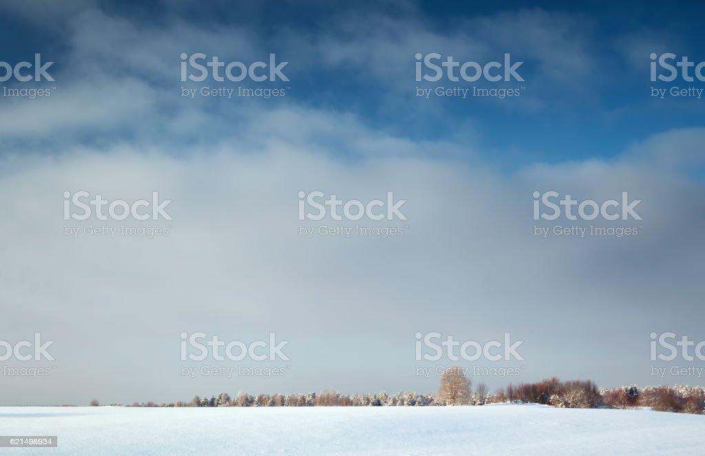 Paysage d'hiver des arbres dans photo libre de droits