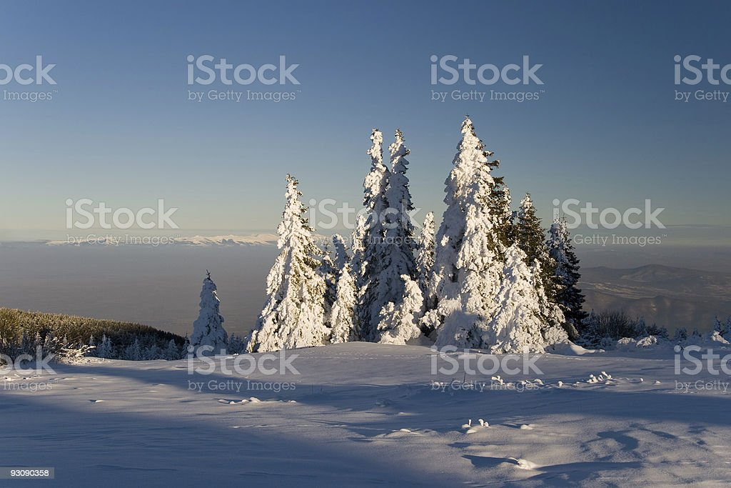 Trees in winter royalty-free stock photo