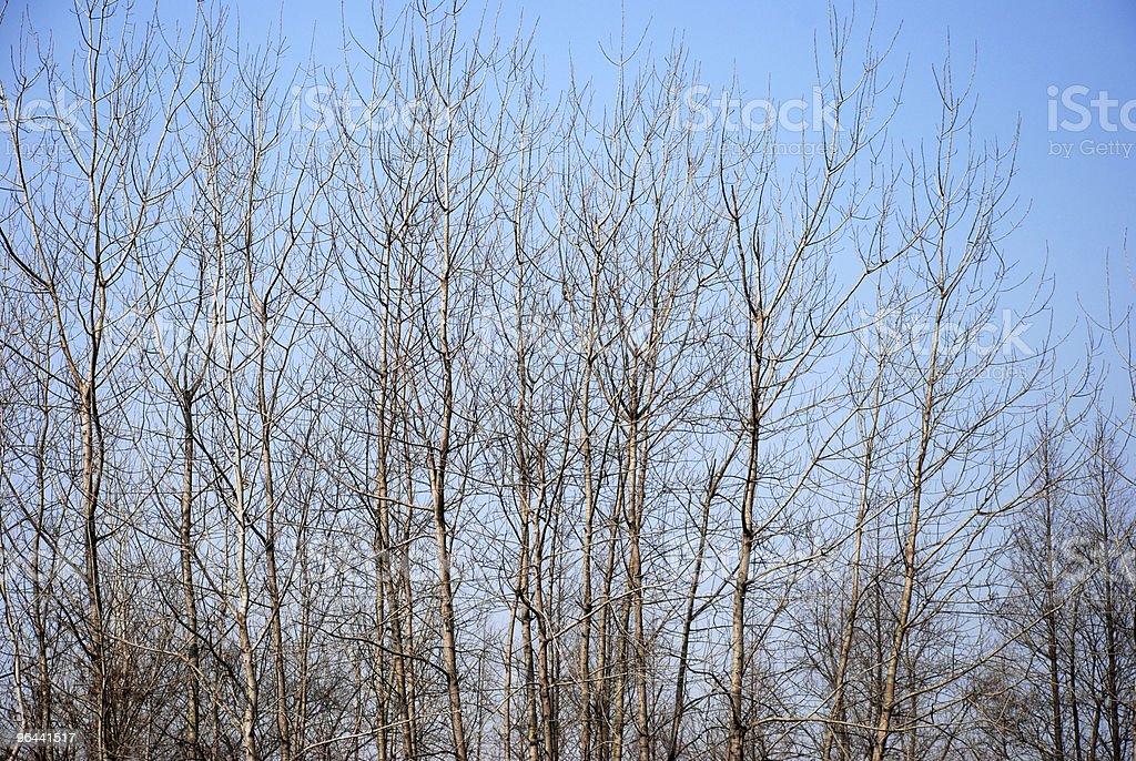 trees in winter - Royalty-free Blauw Stockfoto