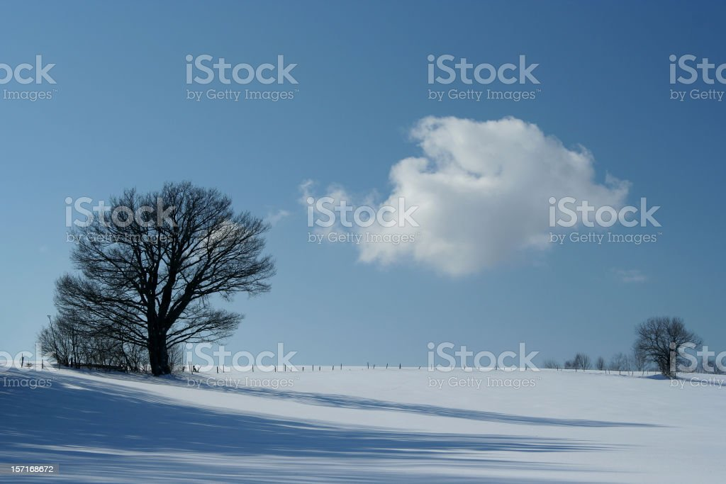 Trees in winter with cloud royalty-free stock photo