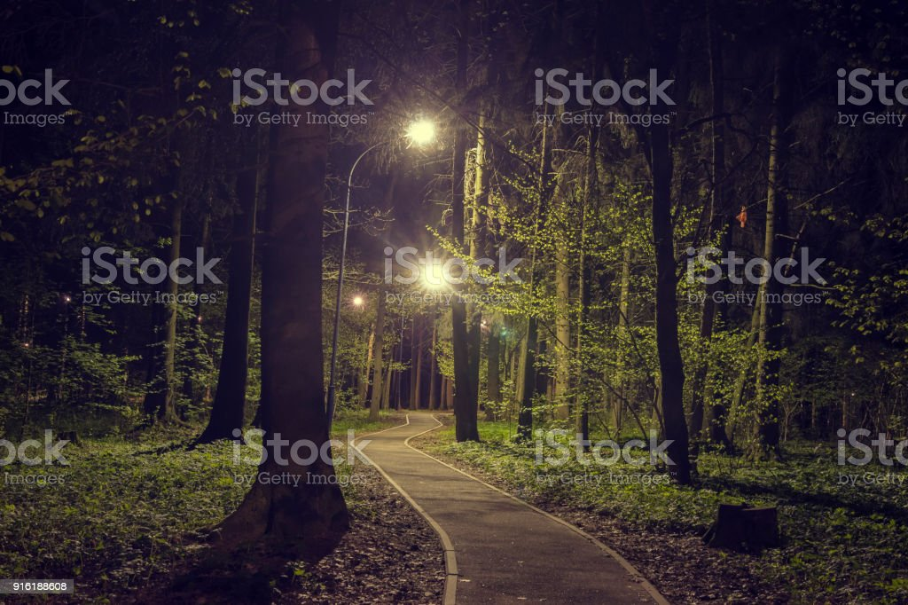 Trees in woodland park with lights at dark night. Landscape of night...