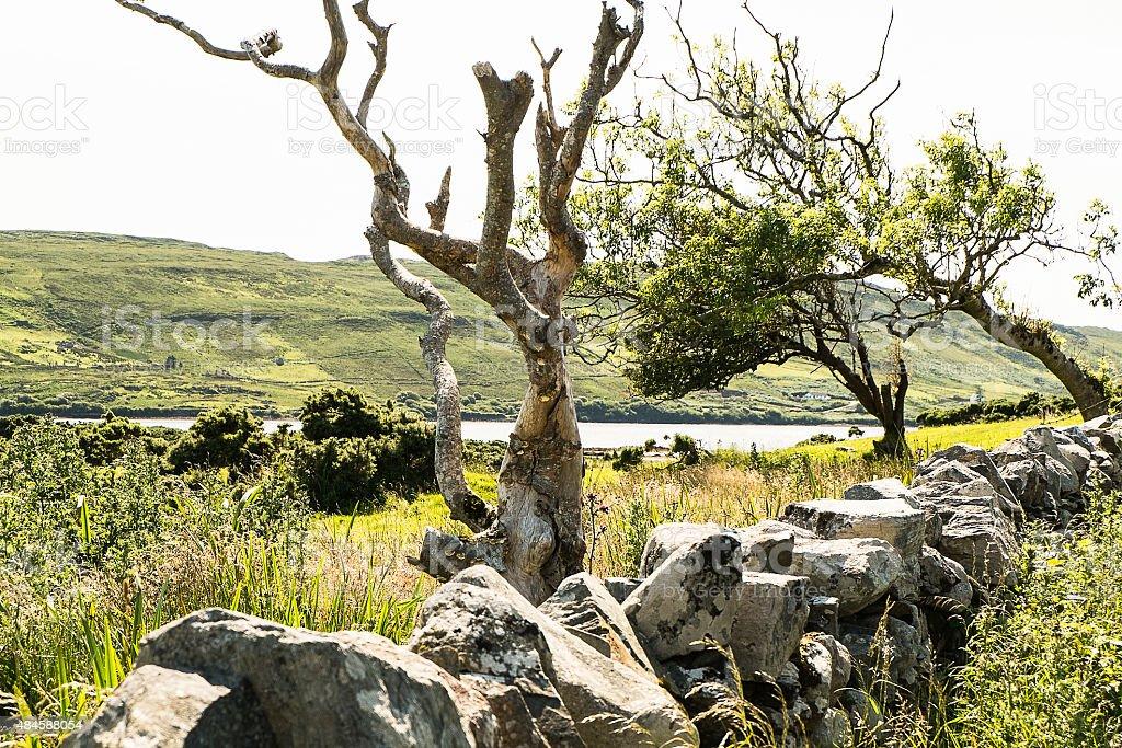 Trees, Irish landscape stock photo