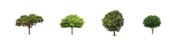 trees isolated on white background - tree logo stock photos and pictures