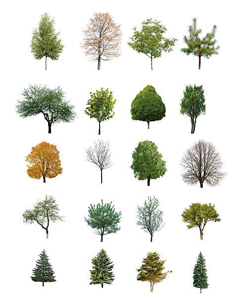 trees isolated stock photo