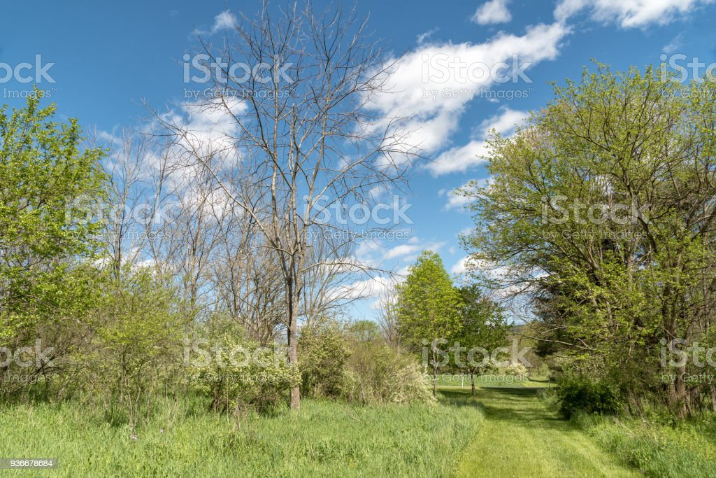 Trees Killed By Emerald Ash Borer, Dendrology Study stock photo