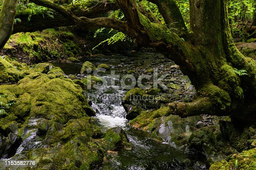 trees, lakes and streams in Tollymore Forest Park, Ireland