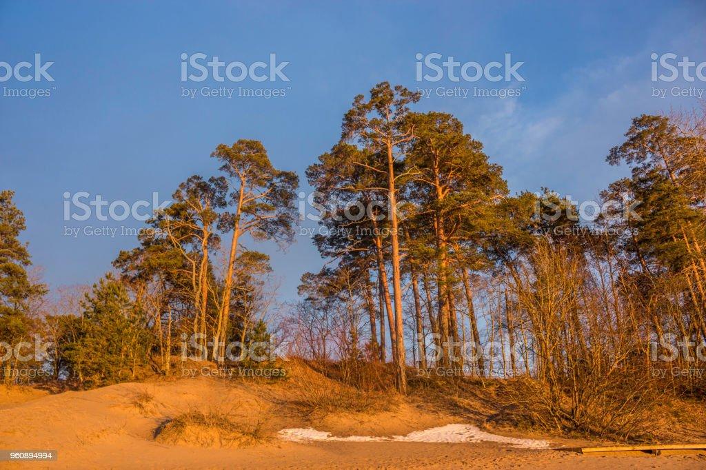 Trees like goldbars stock photo