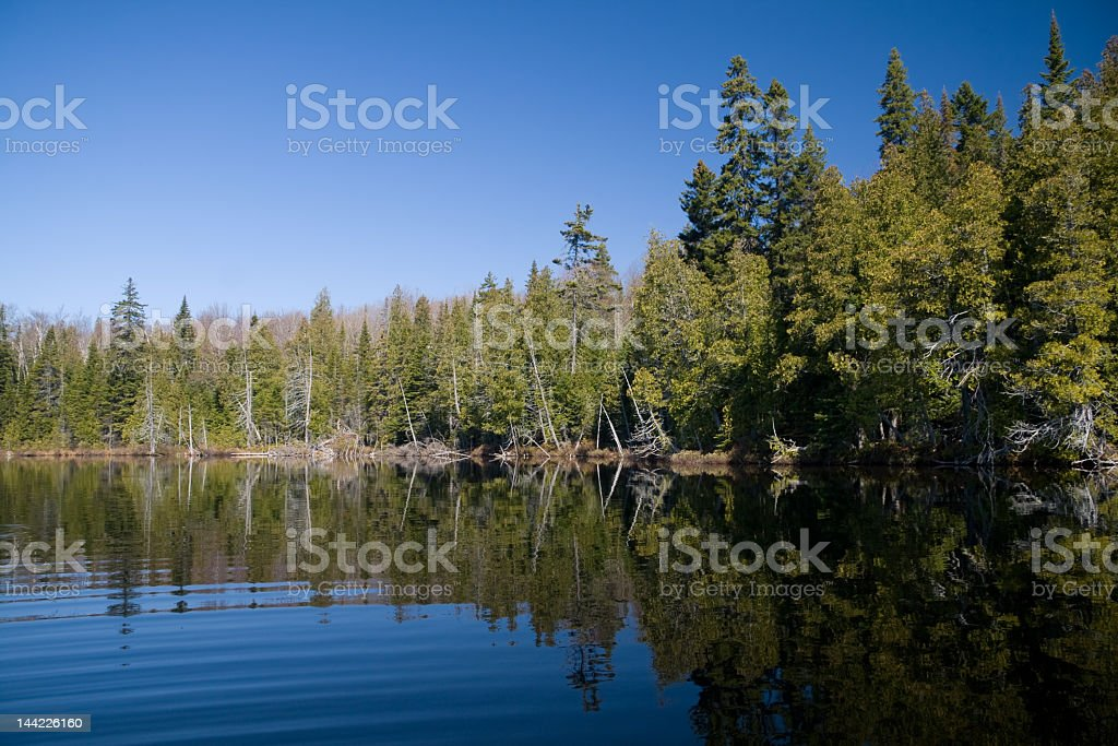 Trees lining a lake shore, in the Boreal Forest  stock photo