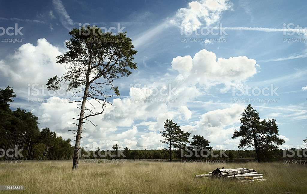 Trees & Logs royalty-free stock photo