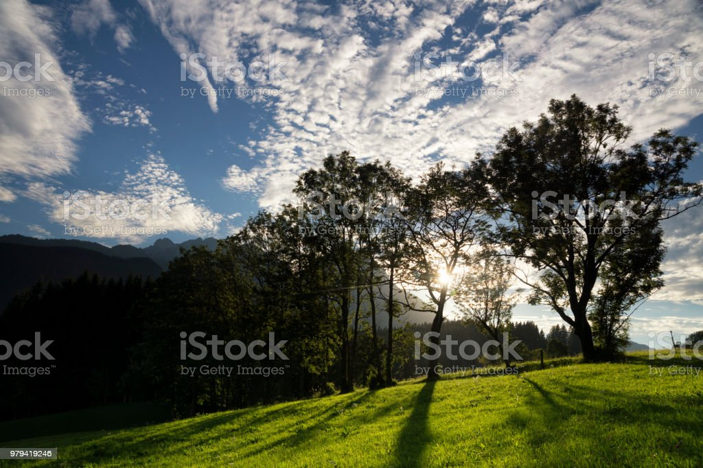 Trees near Annaberg im Lammertal stock photo