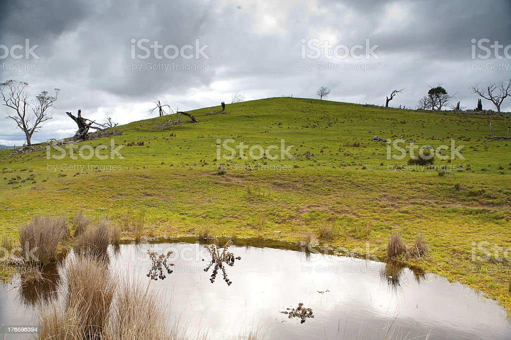 Trees near Bothwell on a Stormy Afternoon royalty-free stock photo