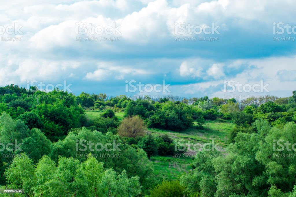 Trees near bushes growing on the slope under white clouds Lizenzfreies stock-foto