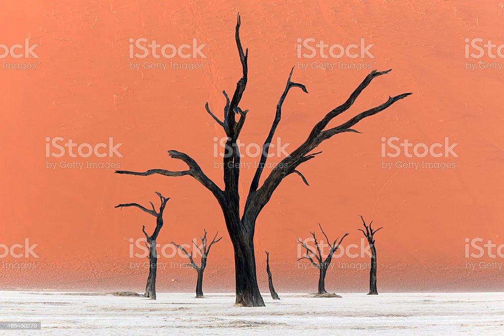 Trees of Deadvlei stock photo