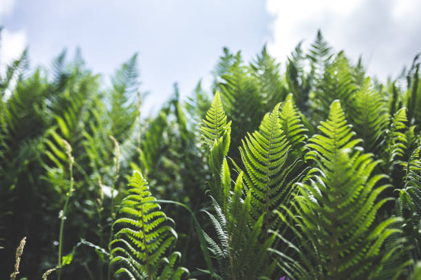 Trees of ferns stock photo