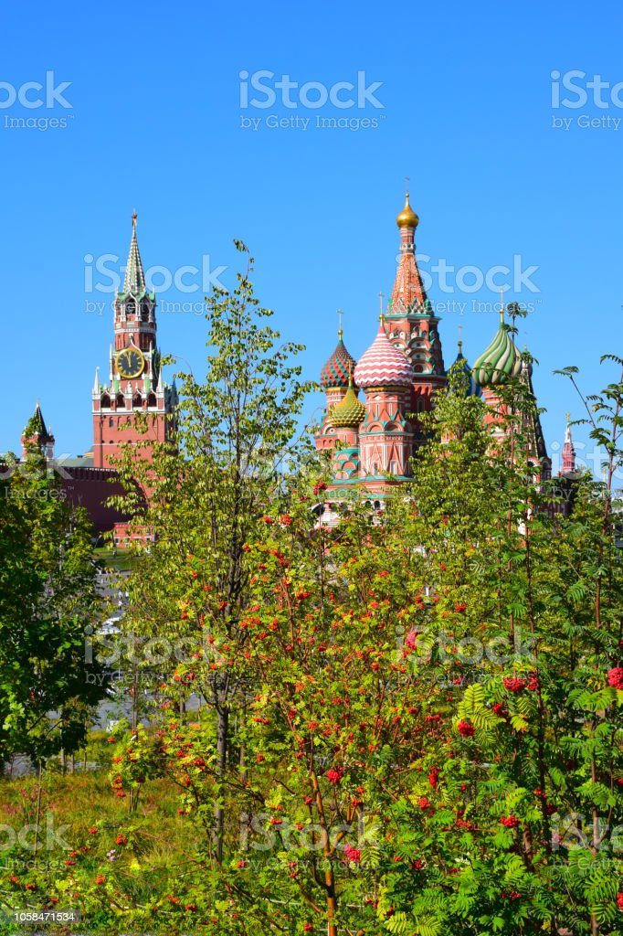 Trees of mountain ash on the background of the cathedral of St. Basil stock photo